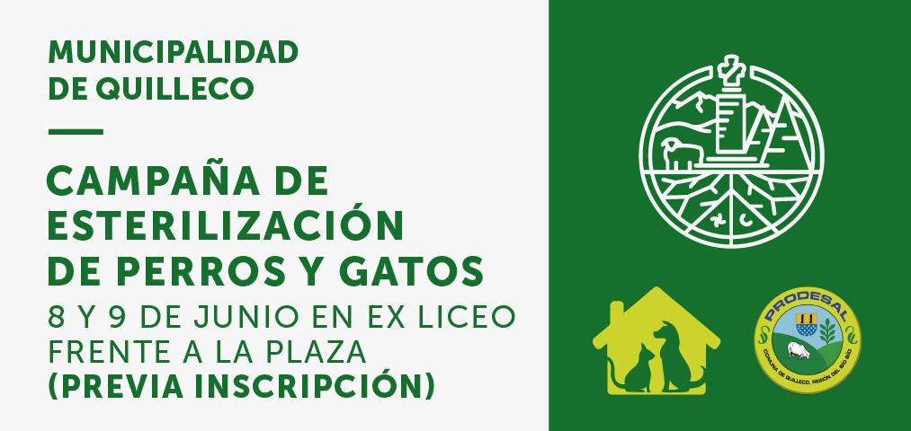 Programa de esterilización Canina y Felina en Plaza de Armas de Quilleco