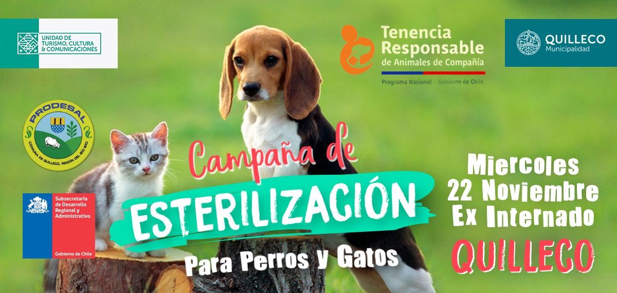 Comienza 5ta Campaña de esterilización para perros y gatos