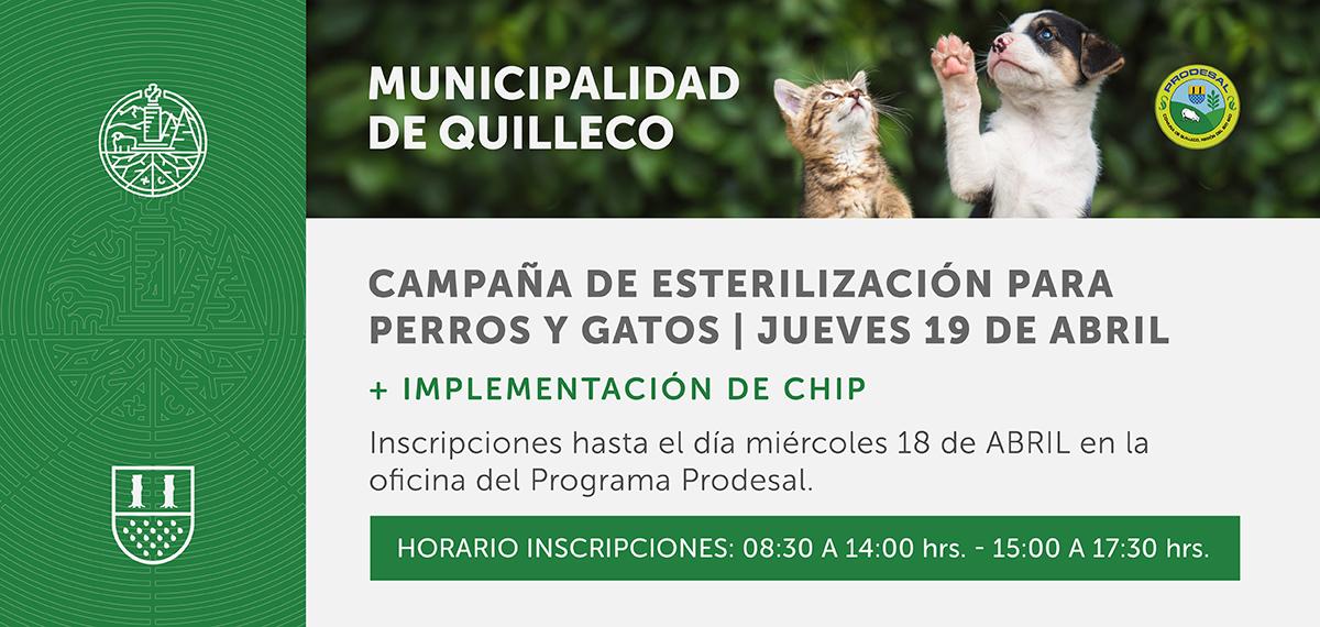 En abril se realizará programa de esterilización canina y felina de forma gratuita