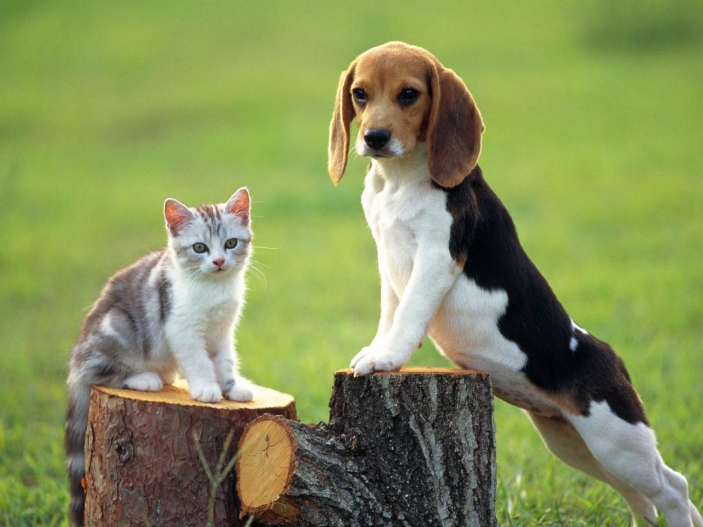 Importante llamado a regularizar la situación de las mascotas que se encuentran sin su Microchip