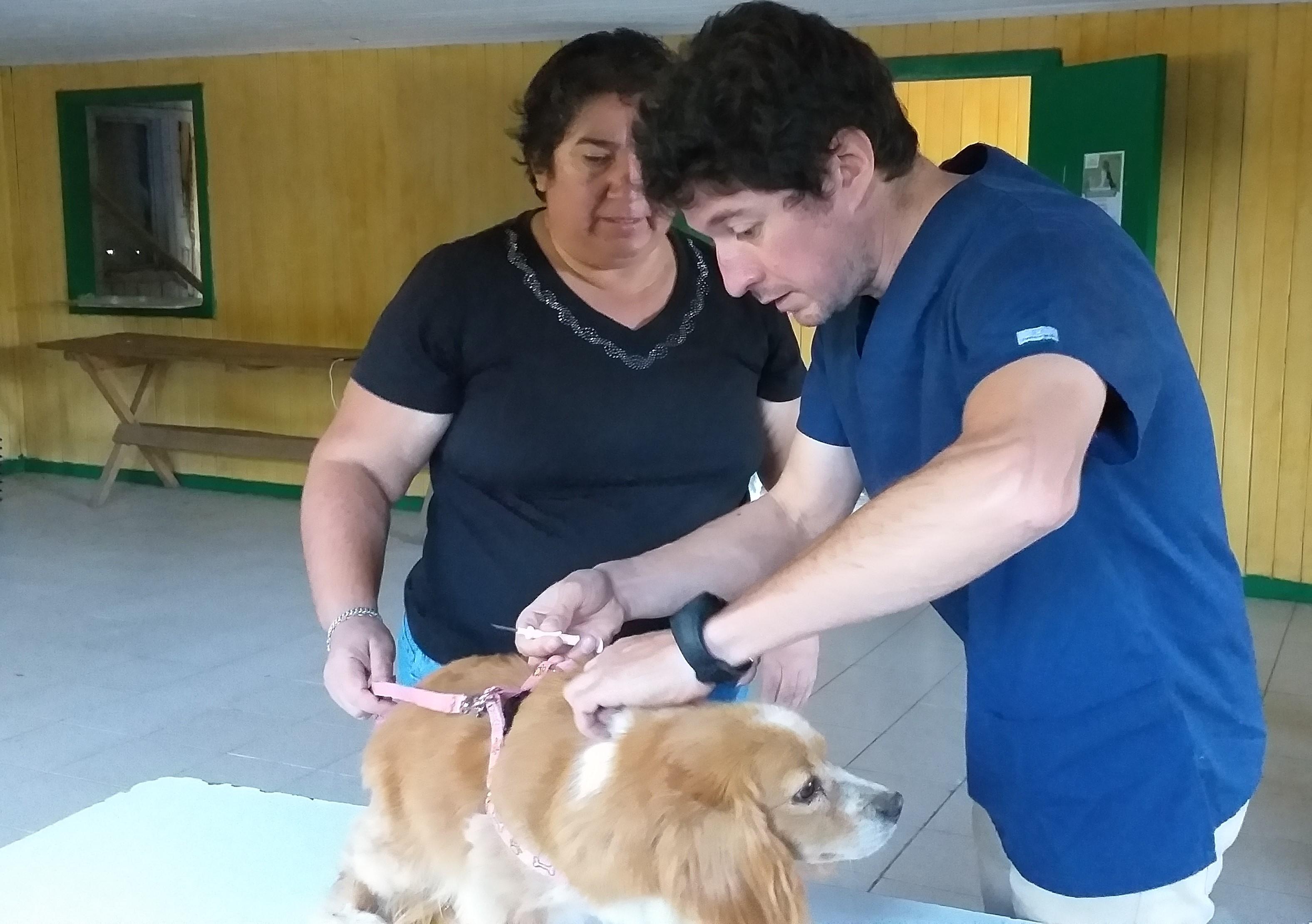 Mascotas de Canteras recibieron Operativo  gratuito de implantación y verificación de microchips