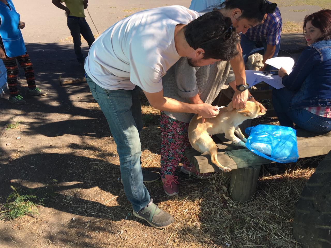 Autogestión y coordinación entre juntas de vecinos y el municipio  ha permitido implantación de microchips a más de 500 mascotas